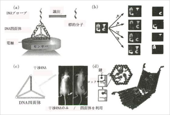 簡単 折り紙 : dna折り紙 : spc.jst.go.jp